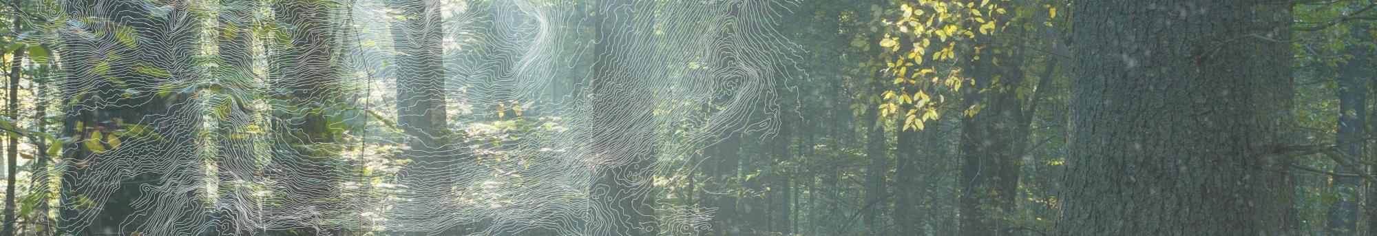 skog-bg-kurvor-informationslider